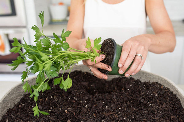CMSPage_How-To | Plant an Herb Garden_ONE_SIZE_IMAGE_01
