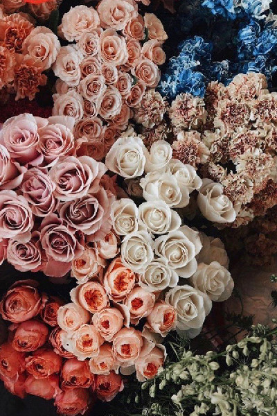 different colored flowers