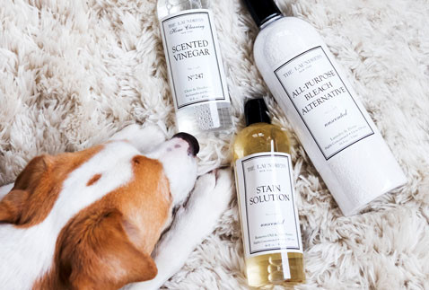 dog with laundress products